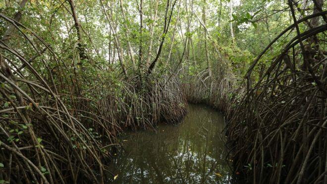 _90509772_mangroves