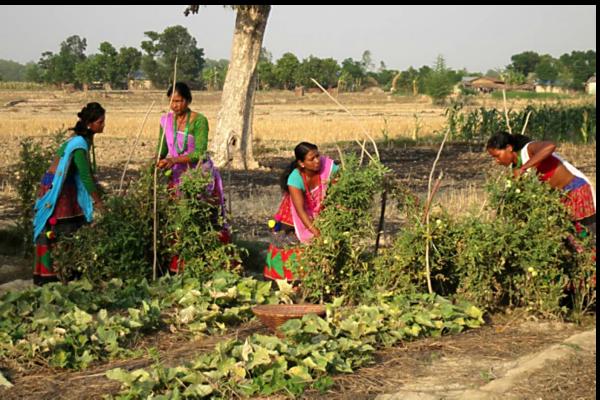 987748_1_0620-nepal-women-farming_standard