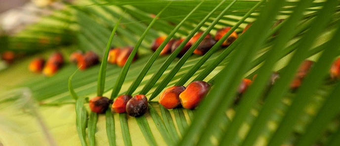 crude-palm-oil-production-indonesian-oil-palm-estates-indonesia-investments-cpo-palm-kernel