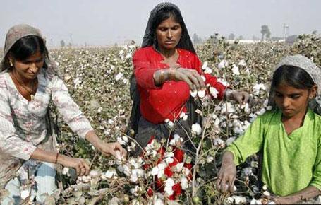cotton-1w