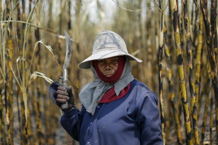 A sugar cane worker poses while working in a field at Pakchong district in Ratchaburi province, Thailand March 22, 2016. REUTERS/Jorge Silva