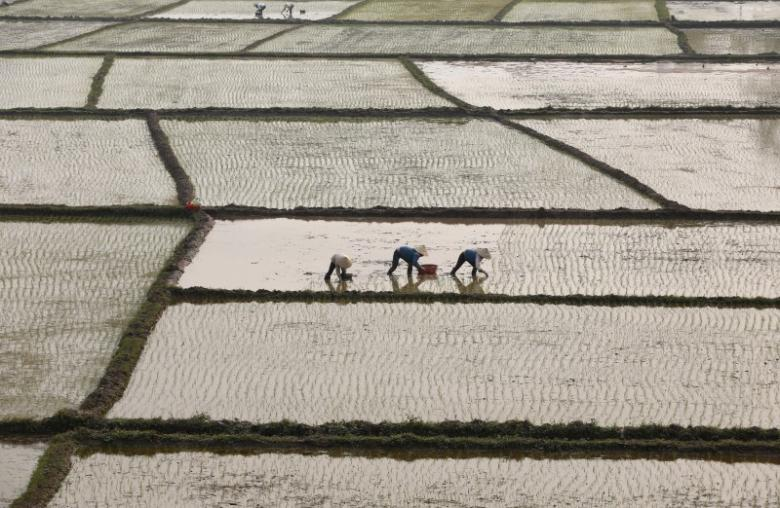Farmers plant rice on a paddy in Vietnam's northern Phu Tho province, outside Hanoi, February 21, 2016. REUTERS/Kham