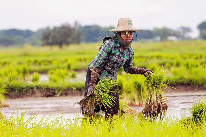 mm_agriculture