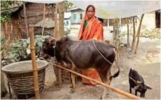 bif_cs_pabnameat_bangladesh_1-1