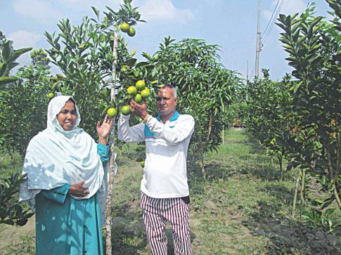 malta_orchard