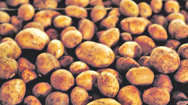 potato_1_0